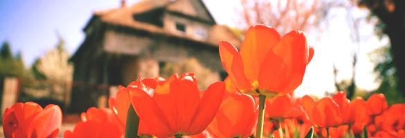 floral-tulip