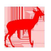 Sq. Antilopi