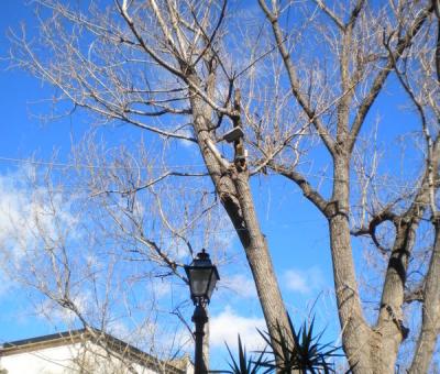 Albero e Cielo - Neri