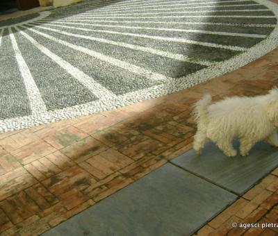 Cane - Pezzati